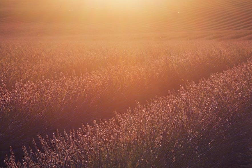 Understanding Lens Flare in Landscape Photography