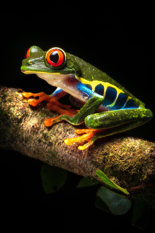 12 Day Costa Rica Wildlife & Landscape Photography Workshop - day 6