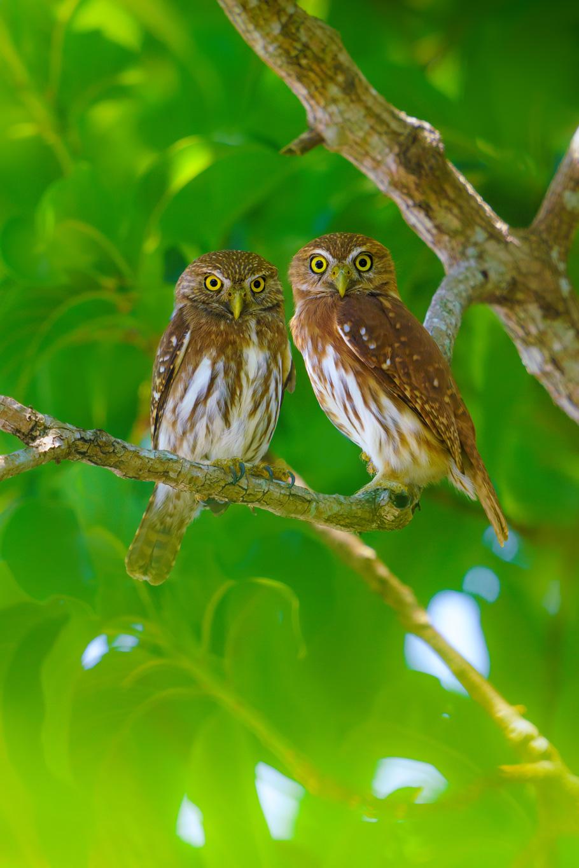 12 Day Costa Rica Wildlife & Landscape Photography Workshop - day 11
