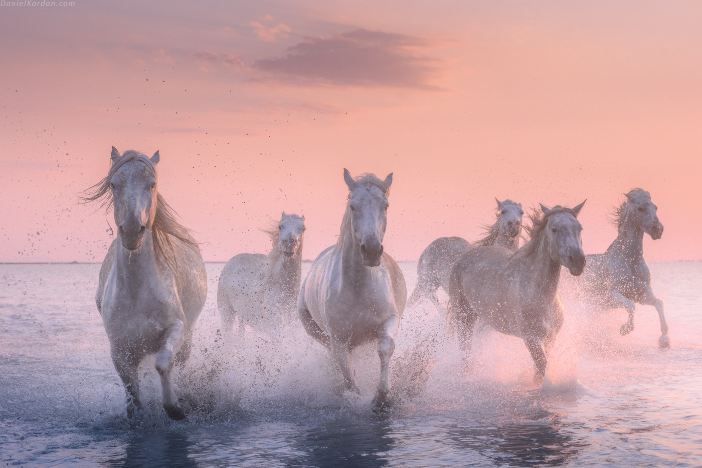 White Horses of Camargue | 5 Day Photo Tour in France - day 1
