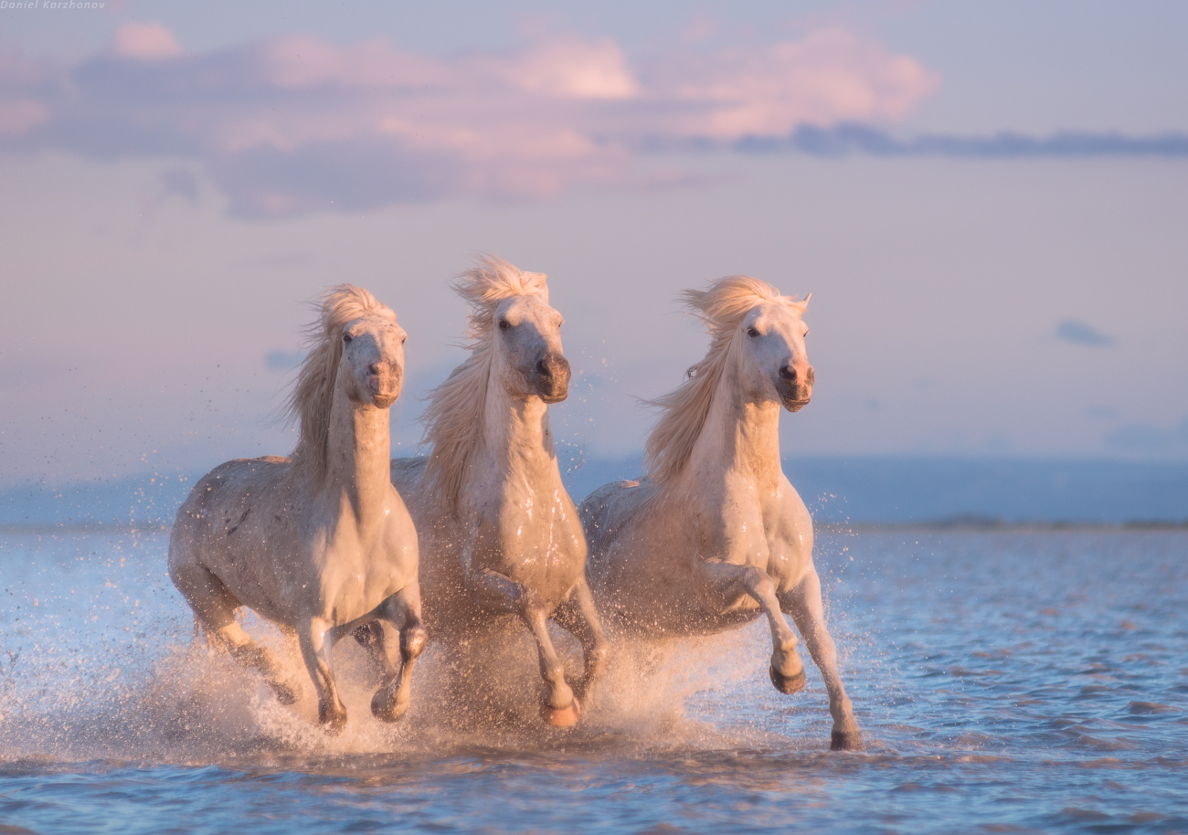 White Horses of Camargue | 5 Day Photo Tour in France - day 2