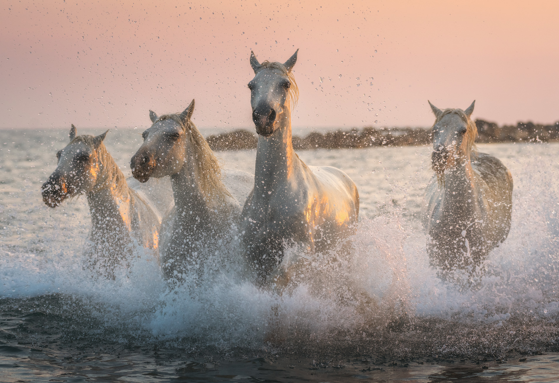 White Horses of Camargue | 5 Day Photo Tour in France - day 3