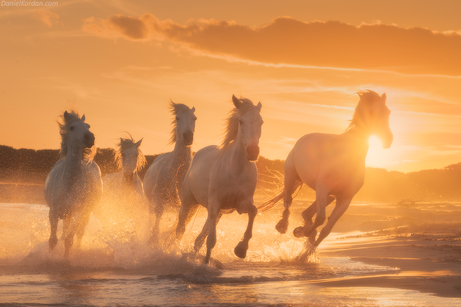 White Horses of Camargue | 5 Day Photo Tour in France - day 4