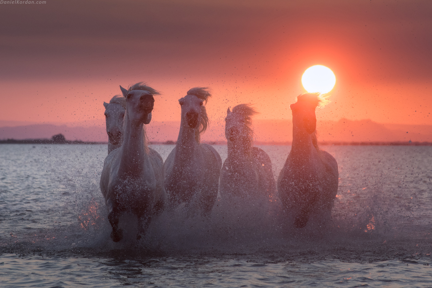 White Horses of Camargue | 5 Day Photo Tour in France - day 5