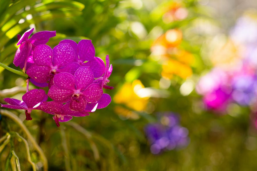 Ultimate Guide to Achieving Beautiful Bokeh