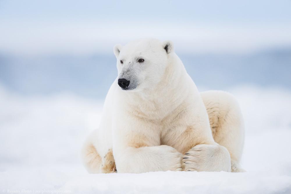 9 Day Photography Voyage to Spitsbergen in Svalbard - day 9