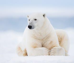9 Day Photography Voyage to Spitsbergen in Svalbard