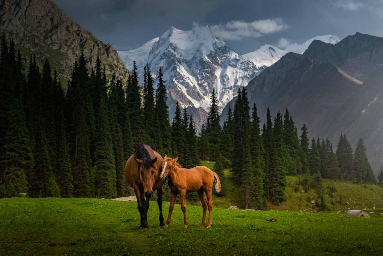12 Day Kyrgyzstan Photo Tour | Mountains, Lakes & Canyons - day 5