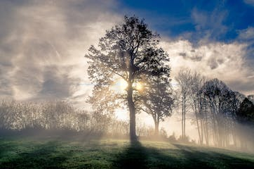 fog-sky-nature-tree-atmosphere-woody-plant-1435821-pxhere.com.jpg