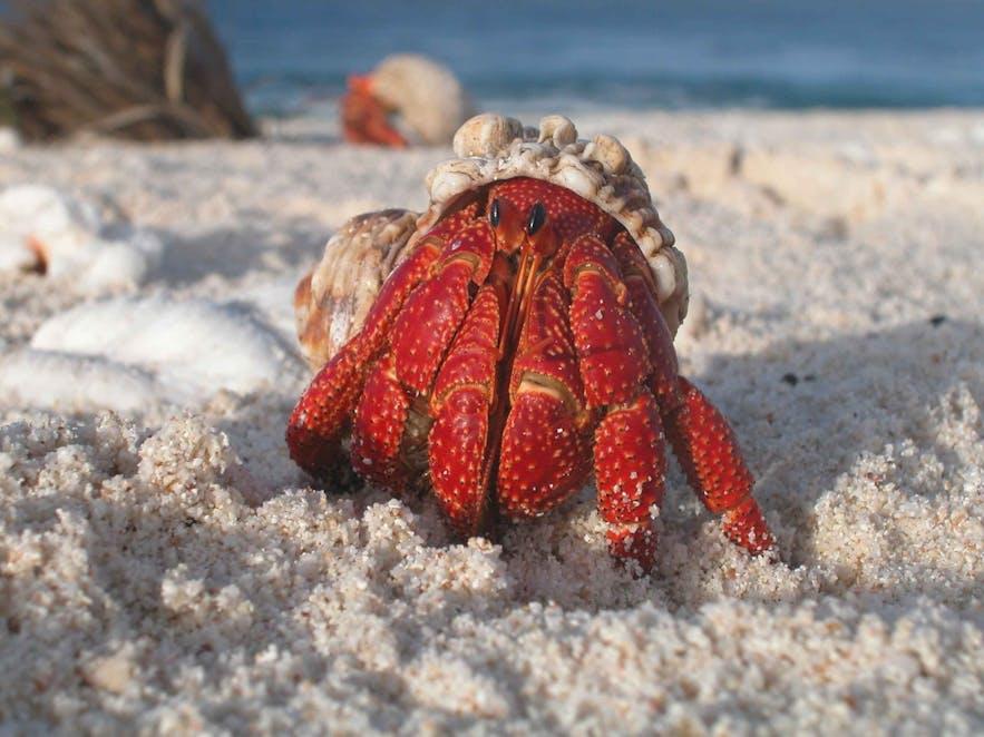 25 Tips for Creative Beach Photography