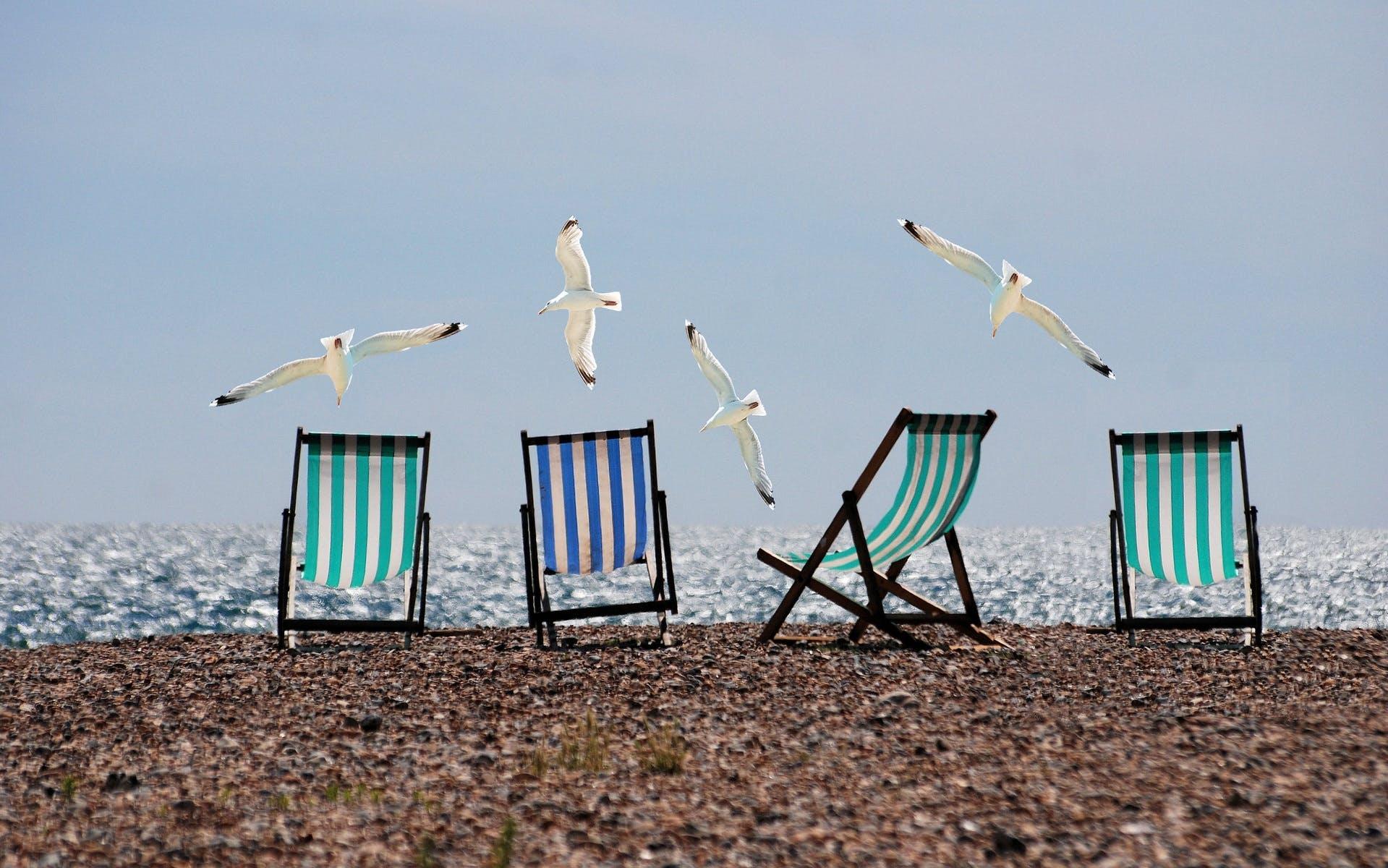 beach-sea-coast-bird-wind-seabird-715603-pxhere.com.jpg