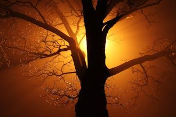 Stock-Sunset-tree-nature-branch-silhouette-light-abstract-1159692-pxhere.com.jpg
