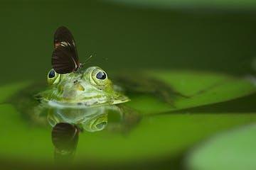 Stock-FocusStacking-frog-540812_1920.jpg