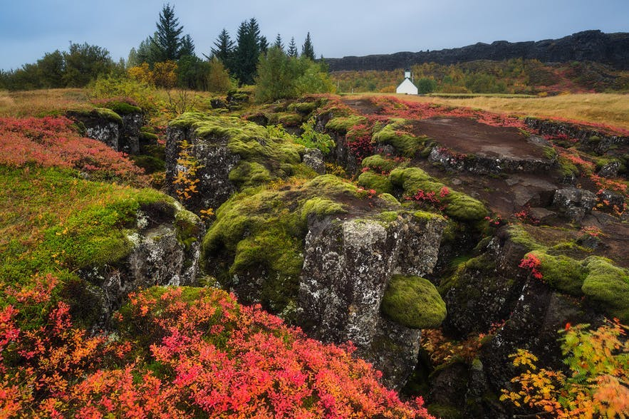 A luscious Iceland landscape showing wildflowers and trees along a rocky surface - Iceland Photography | Everything You Need To Know