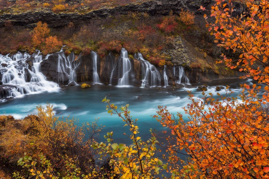 A waterfall in the background is foreshadowed by autumnal coloured leaves - Iceland Photography | Everything You Need To Know