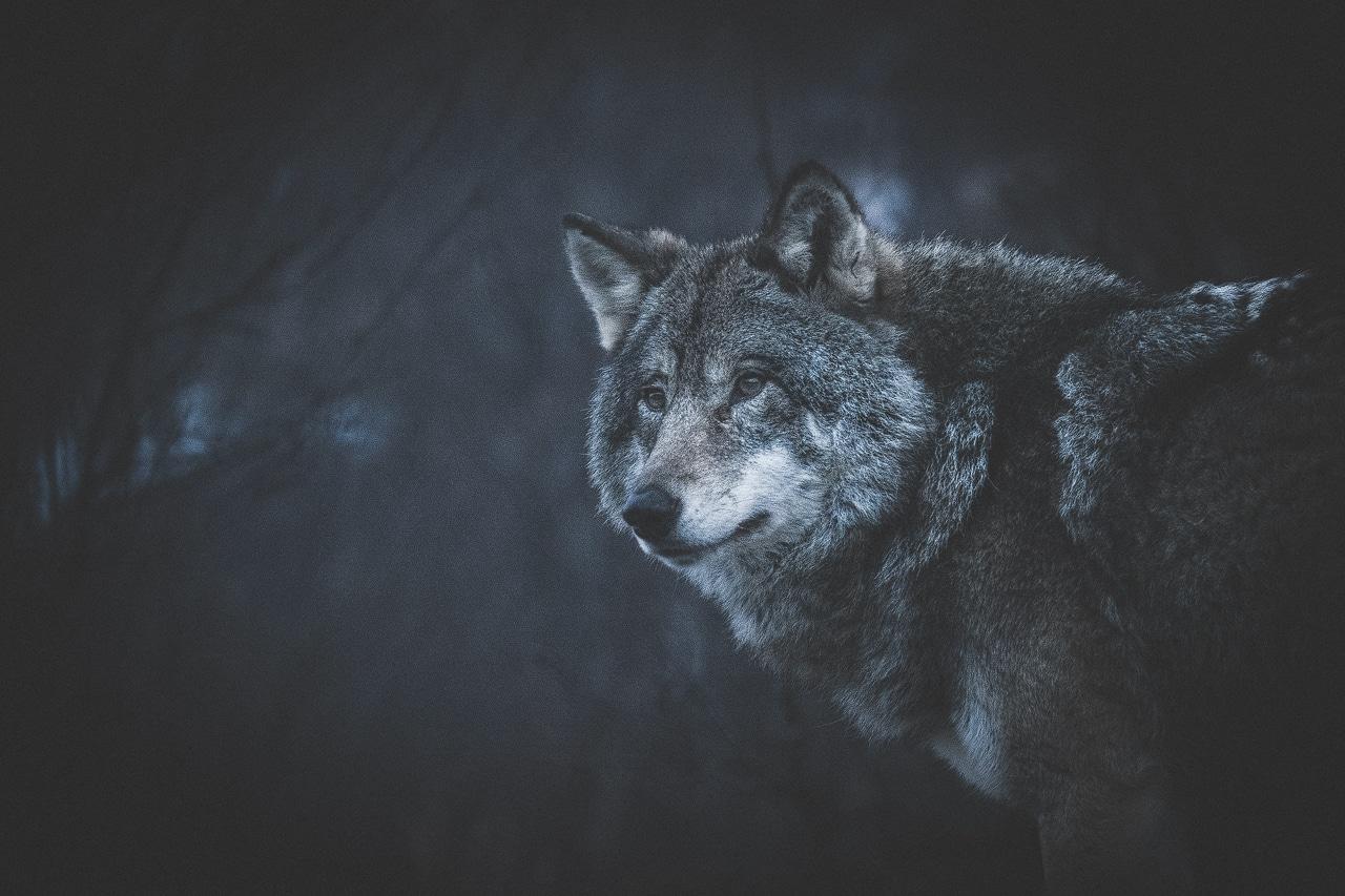 Arctic Borders | Norway & Sweden Photography Workshop - day 6