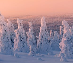 7 Day Finnish Lapland Photo Tour