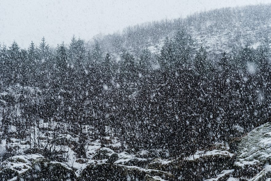 Ultimate Guide to Winter Photography