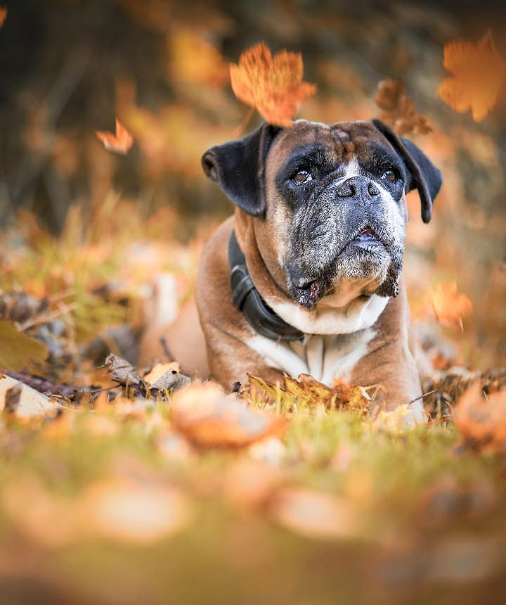 11 Tips for Amazing Autumn Photography
