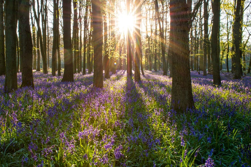 13 Photography Ideas You Need to Try in Spring