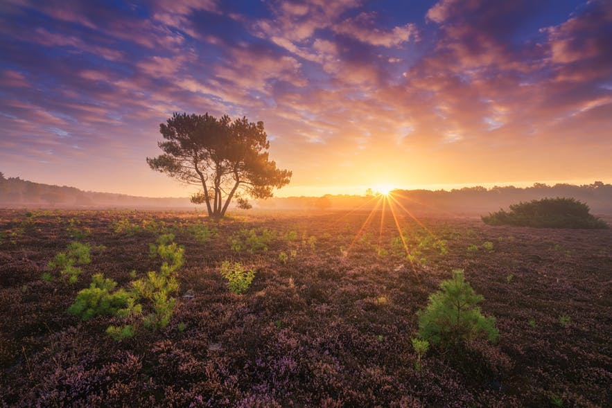 The sun bursts over a field rich in vegetation - landscape Photography | Everything You Need To Know