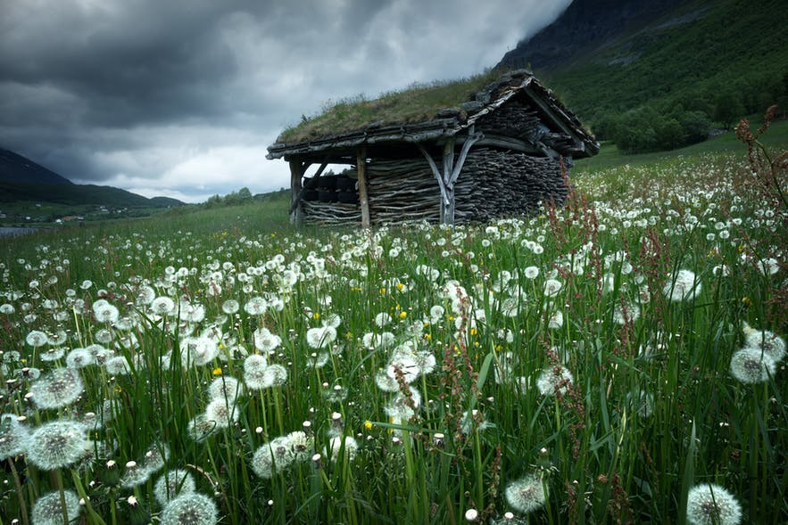 A field of dandelions and a cabin stand on the side of a hill - landscape Photography | Everything You Need To Know
