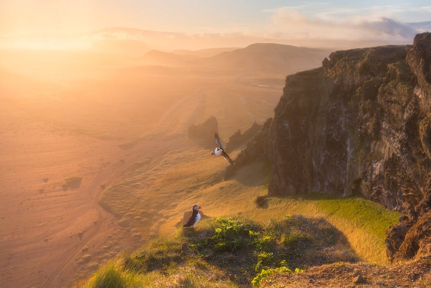 Two puffins sit in the foreground of a mountainous landscape scene while the sun sets in the background - landscape Photography | Everything You Need To Know