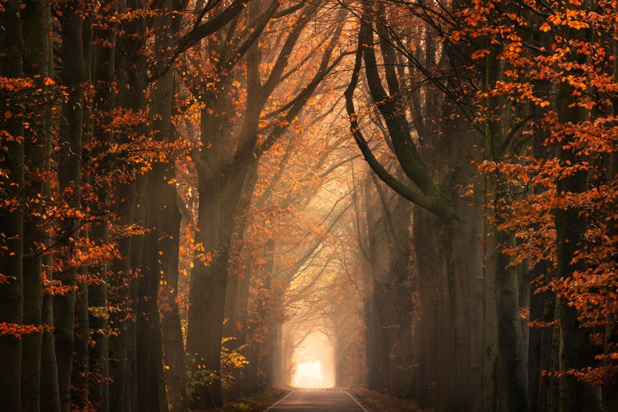 A passageway between trees is a great way to show fog and warm, chiaroscuro light - landscape Photography | Everything You Need To Know