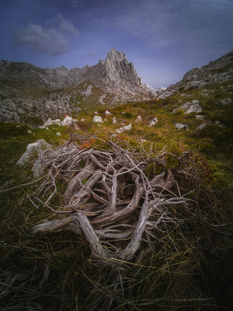 Dry wood sits in the foreground as rocky mountains sit in the background - landscape Photography | Everything You Need To Know