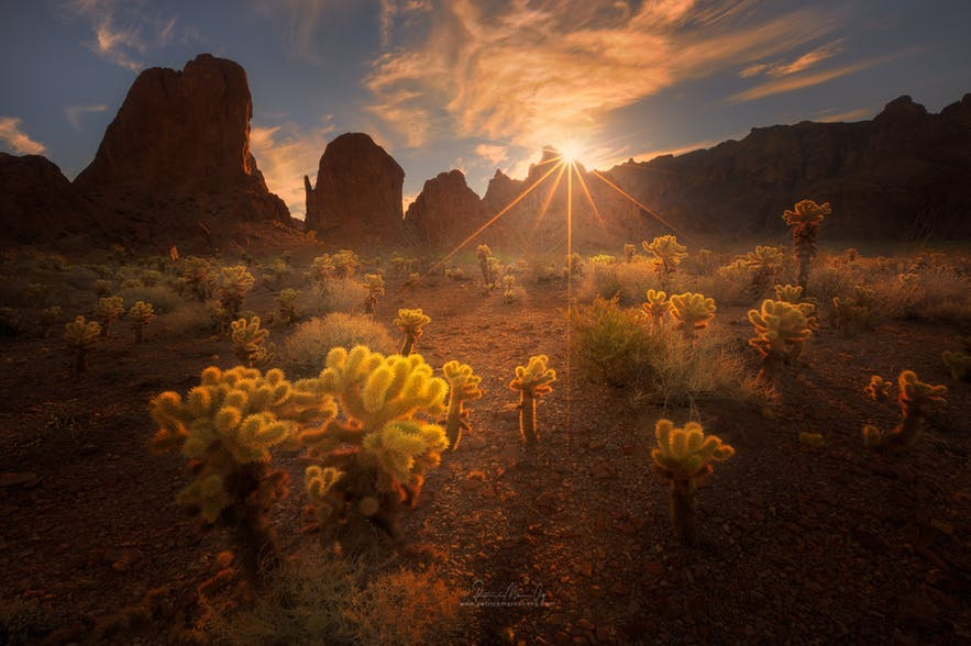 The sun bursts over a landscape scene of rocks and cactuses - landscape Photography | Everything You Need To Know