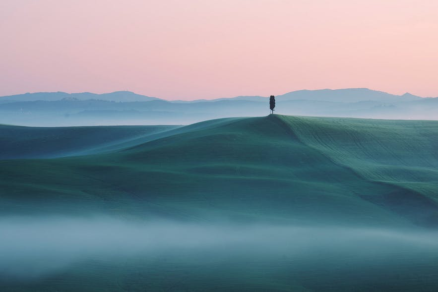 A lone tree stands tall on a hill as a fog floats around - landscape Photography | Everything You Need To Know