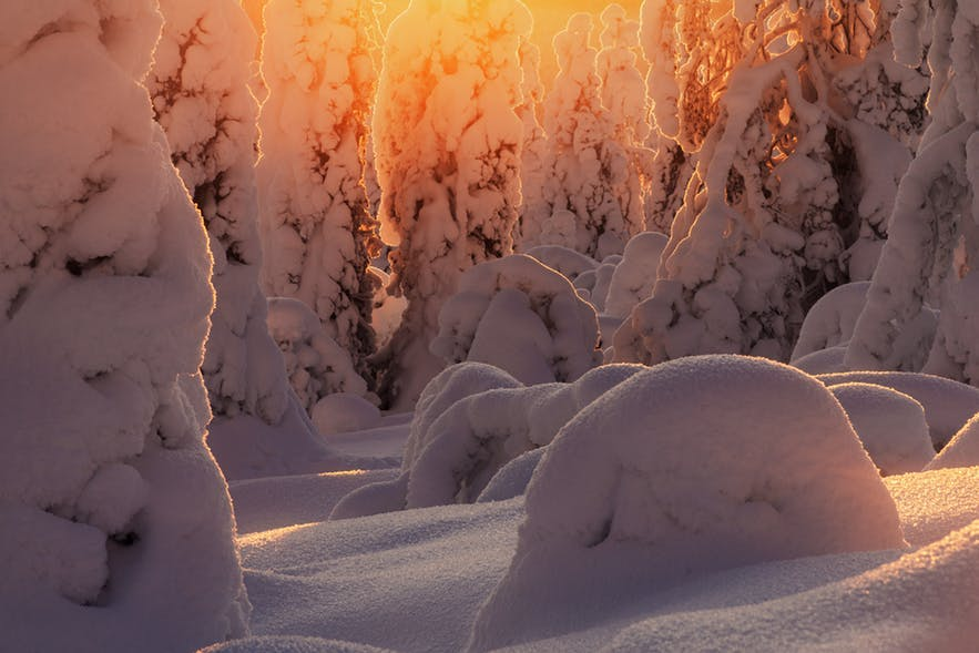 A forest covered in snow is warmed up by an orange lens flare - landscape Photography | Everything You Need To Know