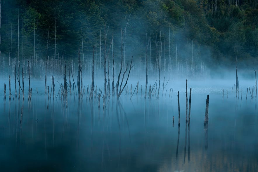How to Improve Your Fog Photography