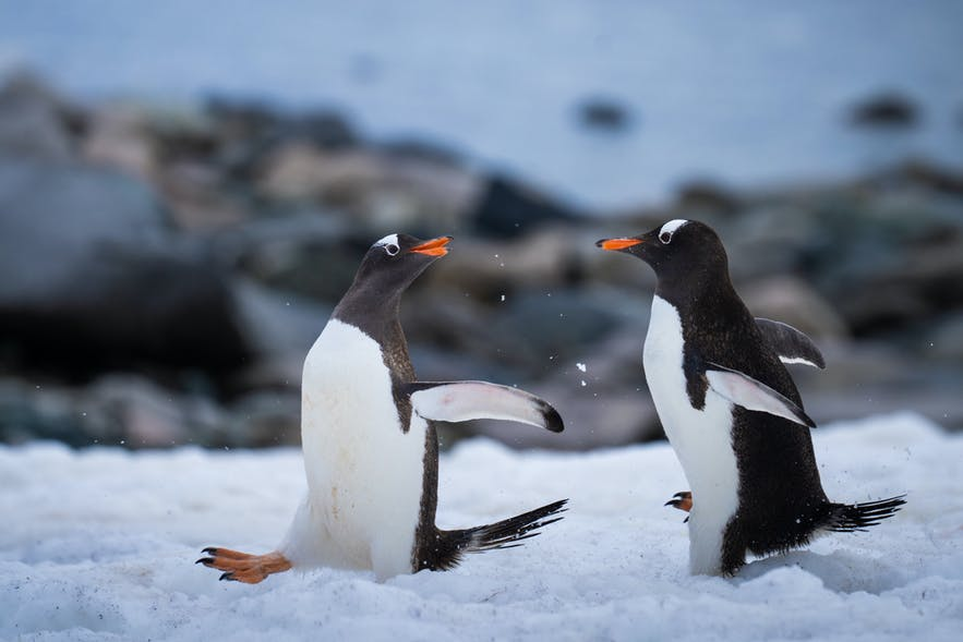 An Unforgettable Trip to Antarctica with Iceland Photo Tours