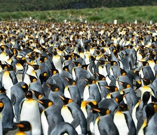 Falklands, South Georgia & Antarctica Photography Expedition