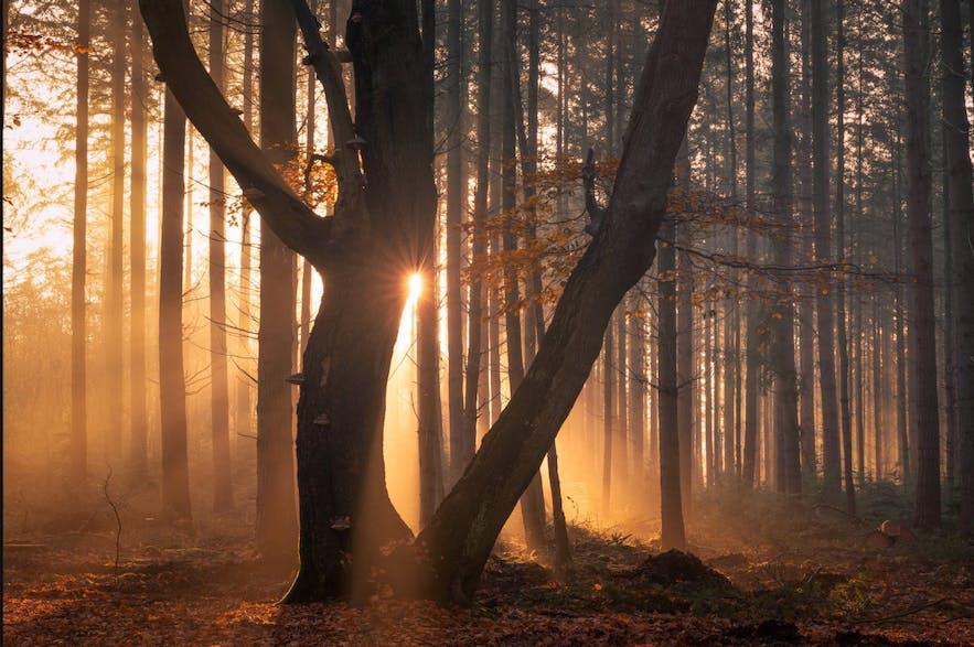 Luminar Photo Processing Guide
