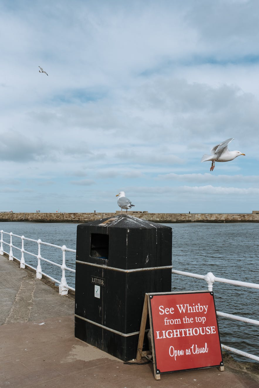 A seagull sat on a bin at a sea front.